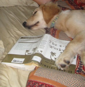 Golden Retriever Puppy Sleeping with a Book under Her Paw