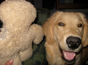 Golden Retriever Puppy with Fleece Dog Toy